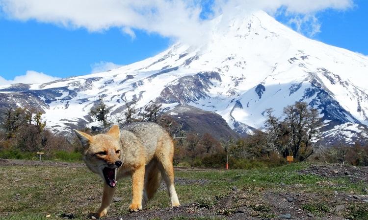 A Lanín-vulkán