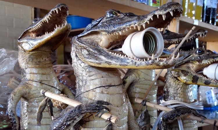 Állólámpa krokodilból