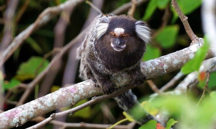 Ég Amazónia - tévhitek és megoldások
