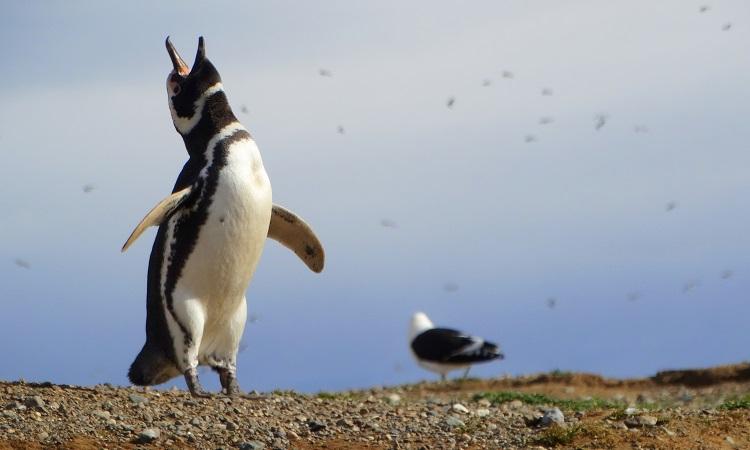 Kupleráj a hajóroncson, az elátkozott erőd és egy halom pingvin