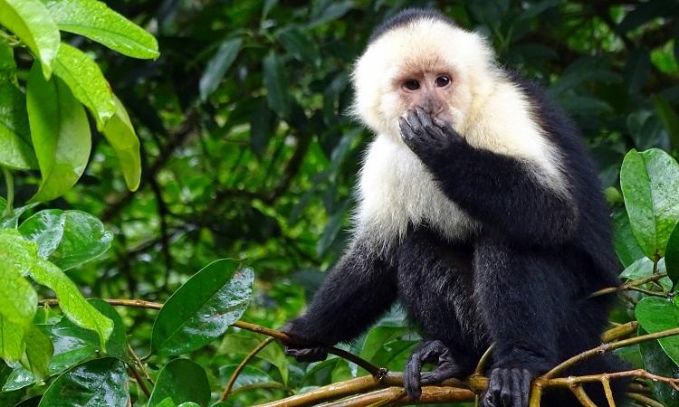 Monteverde - A gazdasági világválság nyertese