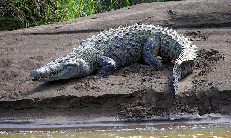 Ezért az élővilágért érdemes Costa Ricába utazni
