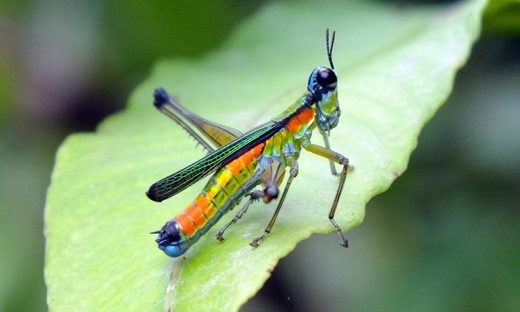 Az ecuadori Amazónia rovarvilága (képes blog)