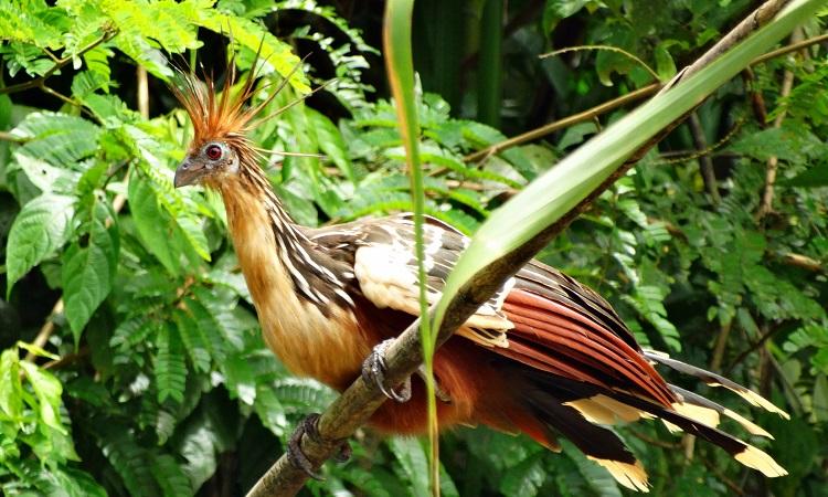 Amazónia leghülyébb madara és 3000 liter benzin