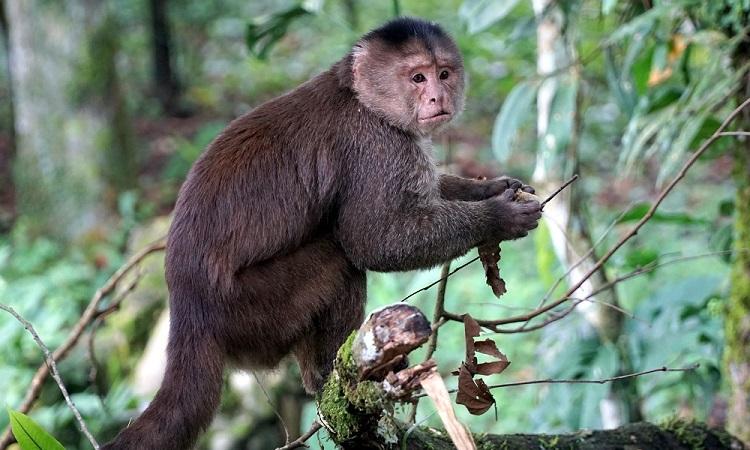 Újra beleszeretni Amazóniába