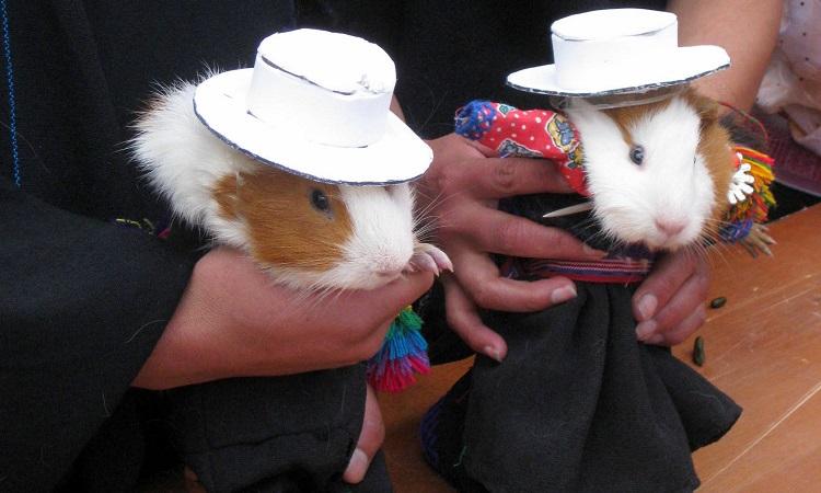 Tengerimalac szépségverseny Saraguróban