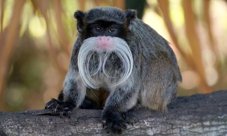 Lajhárok, kajmánok és Dél-Amerika legjobb állatkertje