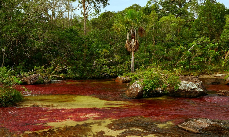 Caño Cristales, a Föld legszebb folyója