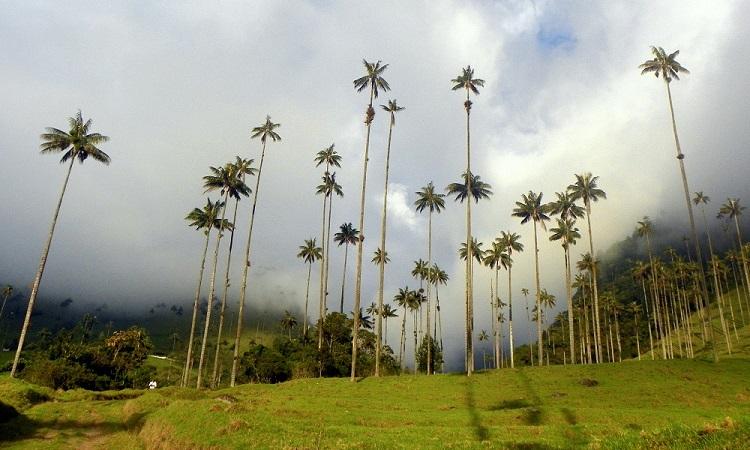 A Cocora-völgy