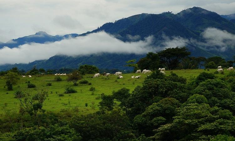 Utazás a FARC fővárosába, San Vicentébe