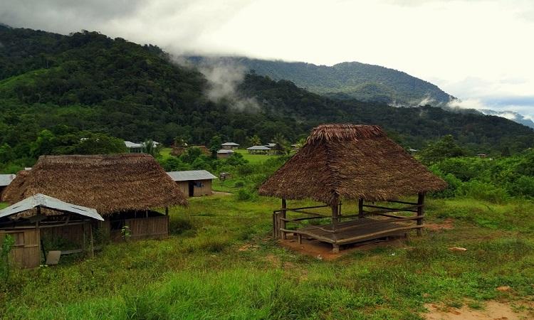 Dögunalom Amazóniában