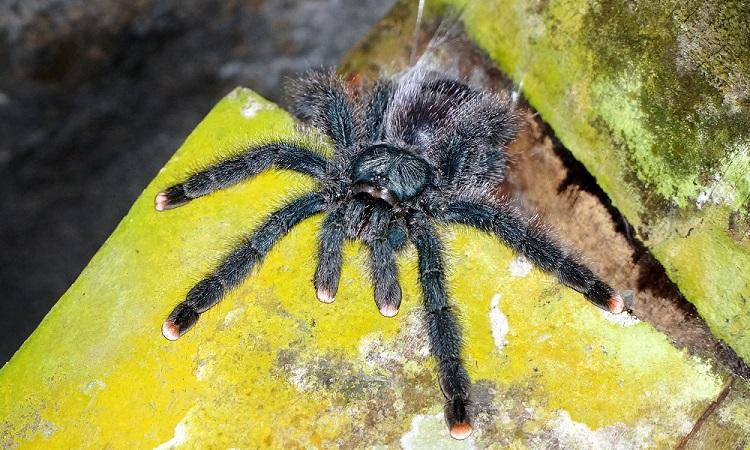 Mérges pókok között a Brownsberg Nemzeti Parkban