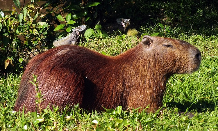 Los Llanos, Dél-Amerika legjobb szafarija
