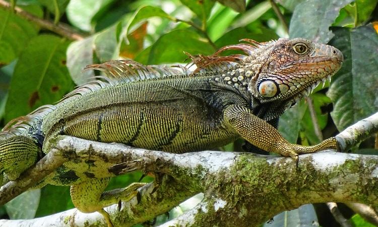 Costa Rica szívatja a turistákat