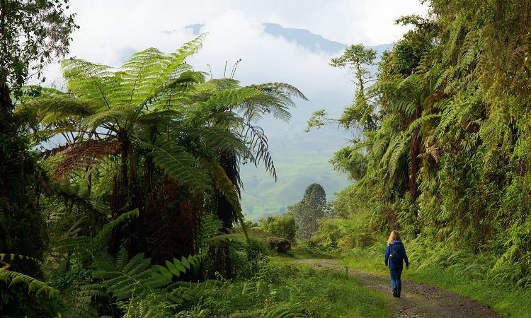 Az Avatart Kolumbiában forgatták?